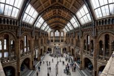 UK Natural History Museum