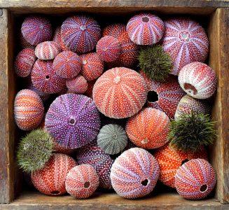 Urchin Shells Jigsaw Puzzle