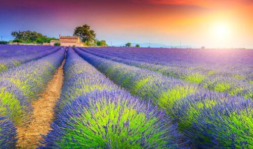Valensole Lavender Jigsaw Puzzle