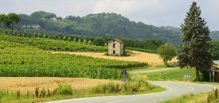 Vineyard and Barn