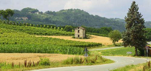 Vineyard and Barn Jigsaw Puzzle