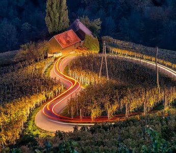 Vineyard at Night Jigsaw Puzzle