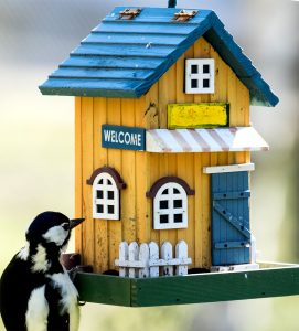 Visiting Woodpecker Jigsaw Puzzle
