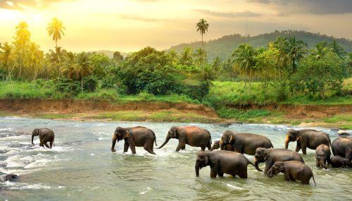 Wading Elephants Jigsaw Puzzle