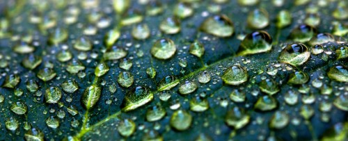 Water Droplets Jigsaw Puzzle