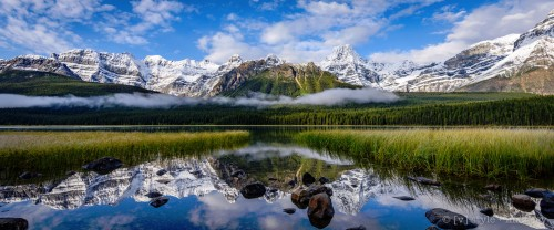 Waterfowl Lake Jigsaw Puzzle