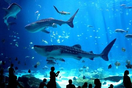 Whale Sharks Jigsaw Puzzle
