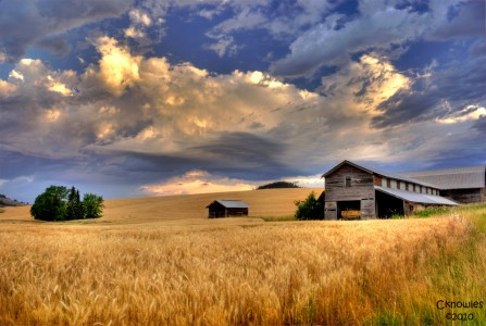 Wheat Farm Jigsaw Puzzle