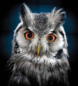 White-faced Scops Owl Jigsaw Puzzle