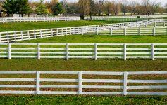 White Fences
