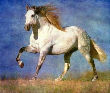 White Horse Jigsaw Puzzle