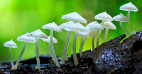 White Mushrooms Jigsaw Puzzle