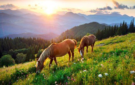 Wild Horse Pair Jigsaw Puzzle