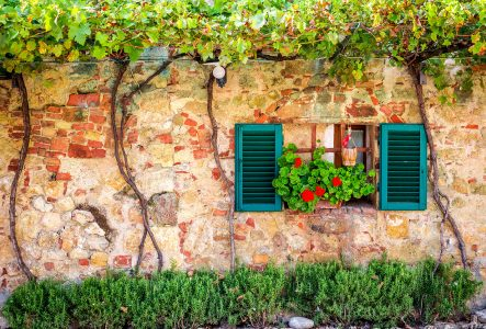 Window and Vines Jigsaw Puzzle