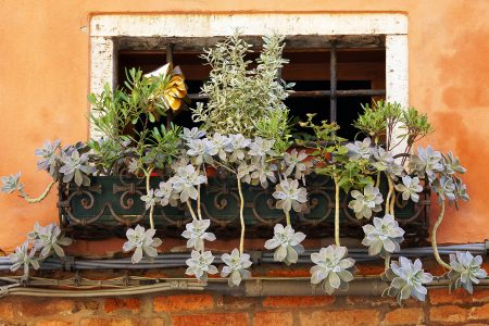 Window Plants Jigsaw Puzzle