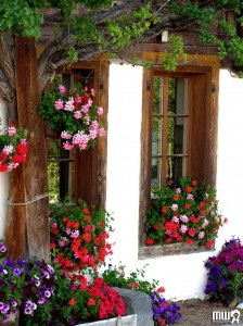 Windows and Flowers Jigsaw Puzzle
