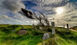 Windswept Graves