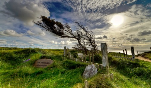 Windswept Graves Jigsaw Puzzle