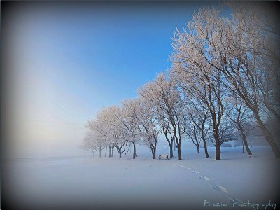 Winter in the Park Jigsaw Puzzle