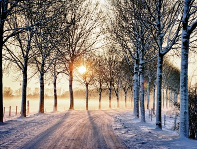 Winter Road Jigsaw Puzzle