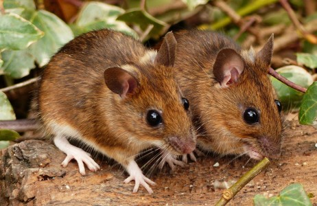 Wood Mice Jigsaw Puzzle