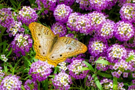 Yellow Butterfly Jigsaw Puzzle