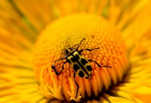 Yellow Flower and Bug