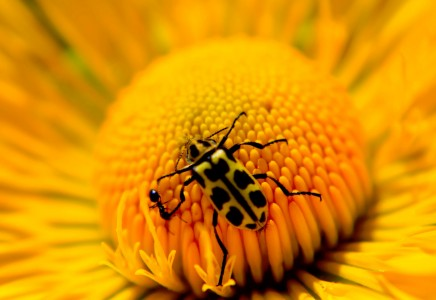 Yellow Flower and Bug Jigsaw Puzzle